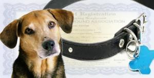 Pet_Registration