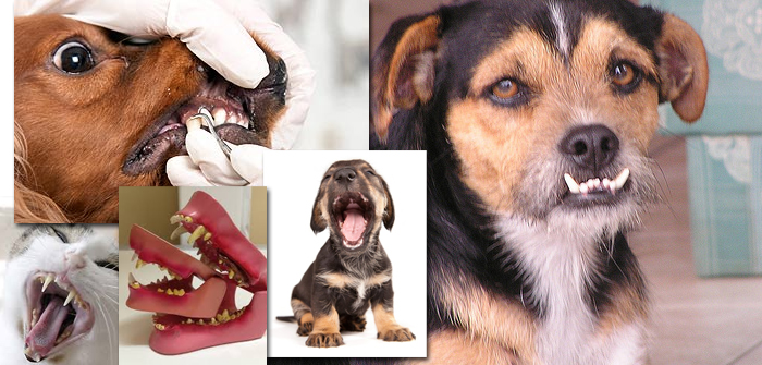Top 5 Dental Problems in Pets