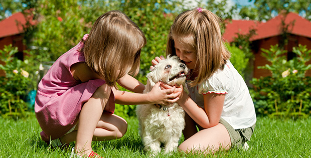 4 Guiding Principles to Follow before Getting a New Puppy