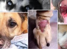 Autoimmune Diseases in Pets