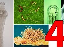 typesofworms