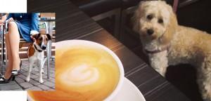 dog in cafe