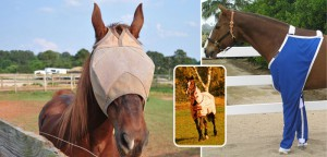 protect-horse-flies