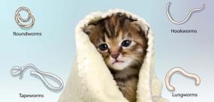 Cat-Worm