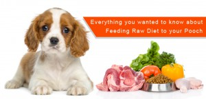 Raw Diet to your Pooch