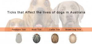 Ticks In Australia