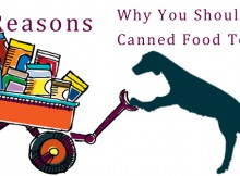 VS-Canned-Food