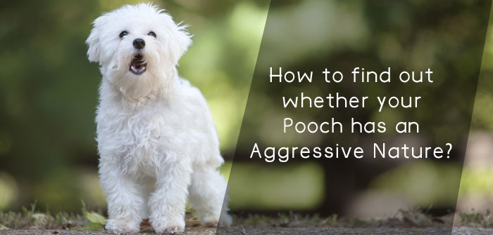 How to find out whether your Pooch has an Aggressive Nature?