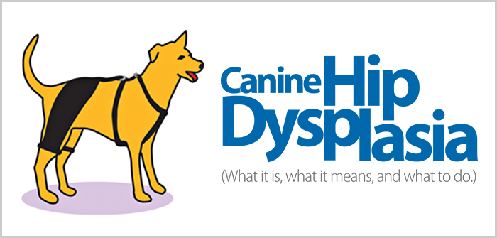 Information Guide On Canine Hip Dysplasia- Know The Basics!