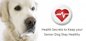VS_seniordog