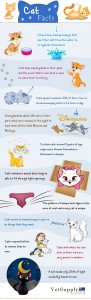 Facts-About-Cat