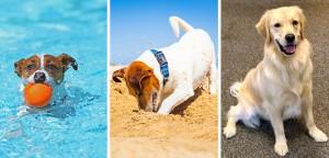 VS_Doggie-Behaviours