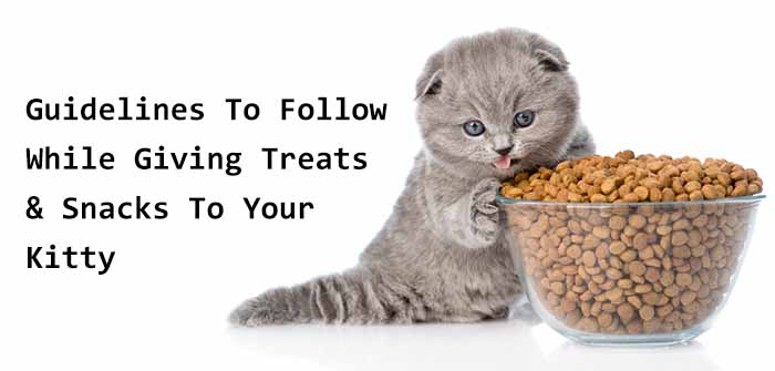 Guidelines To Follow While Giving Treats and Snacks to your Kitty
