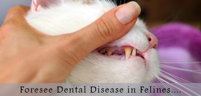 VS-dental-felines