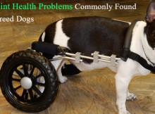 vs-jointproblem