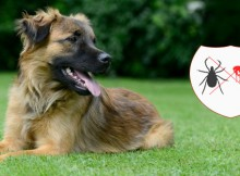VS-Control-Fleas-and-Ticks1