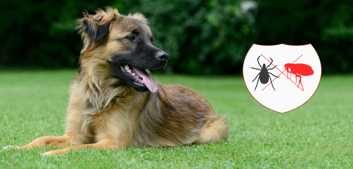Why controlling fleas and ticks on your canine is so important?