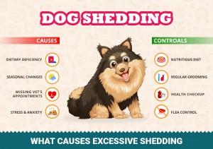 VS-Infographics-DogShadding12