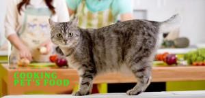 VS-Cooking-Pet-Food
