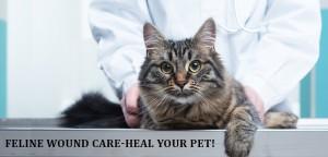 VS-Feline-Wound
