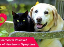 VS-Pet-Heartworm