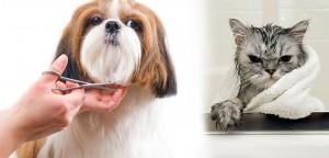 VS-Pets-Care1