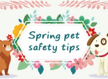 spring-safaty-tips-for-pet-blogsize