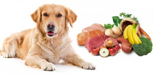 VS-Dog-Food-list1