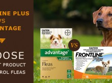best flea control products