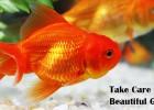 Take Care Of Goldfish