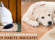 Your Pet's Inappropriate Urinary Habits