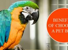 Choosing A Pet Bird