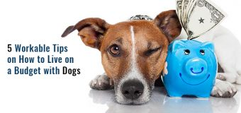 5 Workable Tips on How to Live on a Budget with Dogs