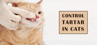 Control Tartar In Cats