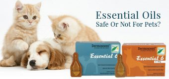 Essential Oils: Safe Or Not For Pets?