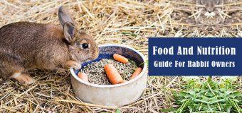 Food And Nutrition Guide For Rabbit Owners