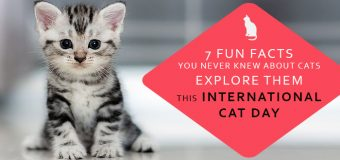 7 Fun Facts You Never Knew About Cats – Explore Them This International Cat Day