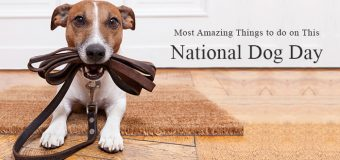 Most Amazing Things to do on This National Dog Day