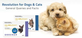 Revolution for Dogs & Cats – General Queries and Facts