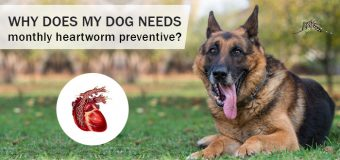 Why does my dog needs monthly heartworm preventive?