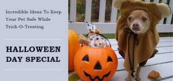 Incredible Ideas To Keep Your Pet Safe While Trick-O-Treating: Halloween Day Special