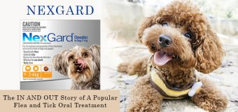 Nexgard – The IN AND OUT Story of A Popular Flea and Tick Oral Treatment
