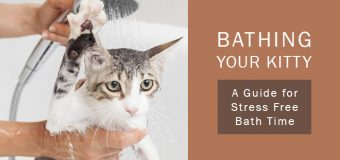 Bathing Your Kitty – A Guide for Stress Free Bath Time