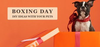 Boxing Day DIY Ideas with Your Pets