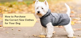 How to Purchase the Correct Size Clothes for Your Dog