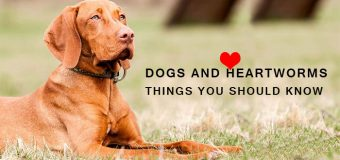 DOGS AND HEARTWORMS: THINGS YOU SHOULD KNOW