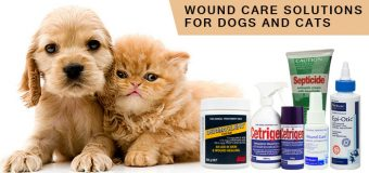 Wound Care Solutions For Dogs And Cats