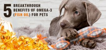 Five Breakthrough Benefits of Omega-3 (Fish Oil) for Pets