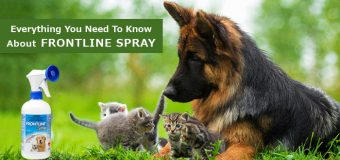 Everything You Need To Know About Frontline Spray