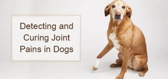 Detecting and Curing Joint Pains in Dogs